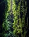 Fern-draped canyon