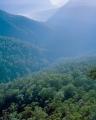 Forest, Govett Gorge