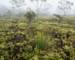 Kanangra wetland