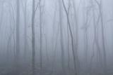 Peppermints in fog