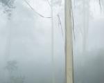 Fogbound, Narrow Neck