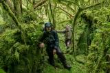 Stump Lake jungle, Fiordland