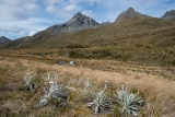 Camp below Livingstone peaks