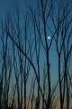 Alpine Ash and moon