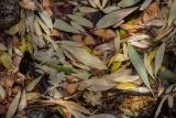Autumn leaf collection, Onion Valley