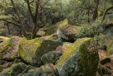 Mossy boulders, Yosemite Valley
