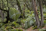 Boulders in Live Oak forest, Yosemite Valley