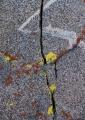 'Rock art' on Temple Crag