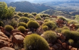 Spinifex, Chewings Range