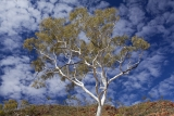 Ghost Gum and sky