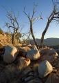 Quartzite boulders