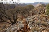 Hill Mulga and Heavitree range