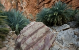 Boulder and cycads