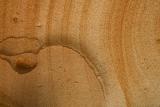Hawkesbury Sandstone detail