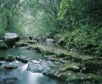 A rainforest creek