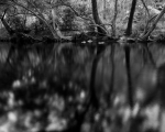 Riverbank shadows, Wet Tropics