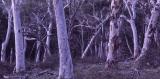Brittle Gums at dusk