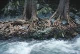 River Oaks, Murruin WIlderness