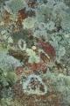 Lichen mosaic I