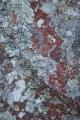 Lichen mosaic III