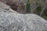 Rock slab and trees