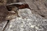 Grey lichens