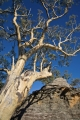 Scribbly Gum and outcrop