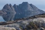 Arctic Willow, Bear Islands