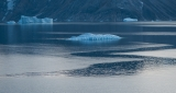 Icebergs, evening