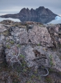 Dwarf willows, Bear Islands