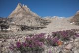 Grundtvigskirken and Arctic Riverbeauty flowers