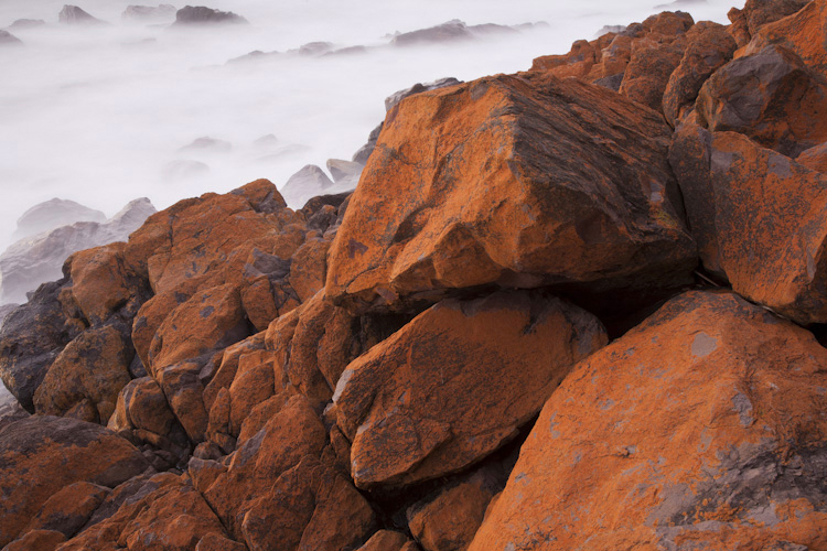 Algal rocks, Hallett Cove