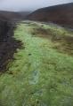 Waterproof moss