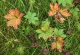 Herbs and grasses, Basar