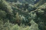 Growing birches, Strakagil ravine
