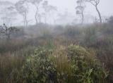 Sedgeland and Brittle Gums, Kanangra Tops