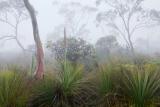 Grasstrees and Brittle Gums, Kanangra Tops
