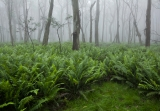 Misty forest, Boyd Plateau