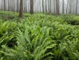 Montane forest, Boyd Plateau