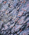 Lichens on quartzite, lower Kowmung River