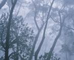 Black Ash and Banksia