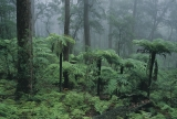 Wet sclerophyll forest