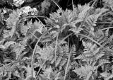 Ferns and sedges, Fiordland