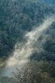 Wisp of mist, Allyn River valley