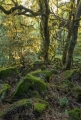 Mountain rainforest, Barrington Tops National Park