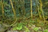 Subtropical rainforest, Paterson River
