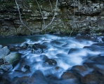 Paterson River lianas
