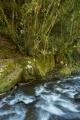Paterson River rapid