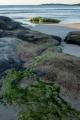 Shoreline algae, Bawley Point