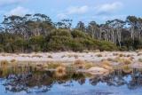 Willinga Creek lagoon, dawn